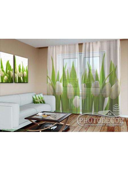 "3D ФотоТюль ""Белые тюльпаны"""