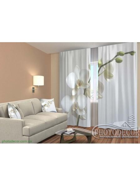 """3D ФотоШторы """"Веточка белых орхидей"""""""